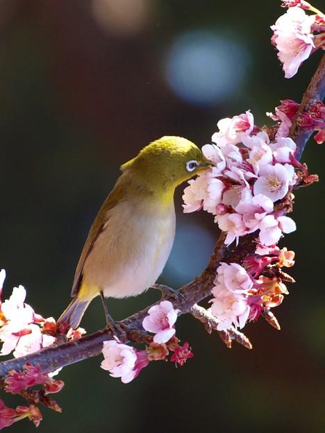Photos: 早春