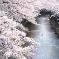 Photos: 春の流れ