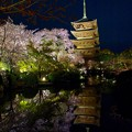 Photos: 春夜