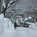写真: 排雪後の桜大通り03