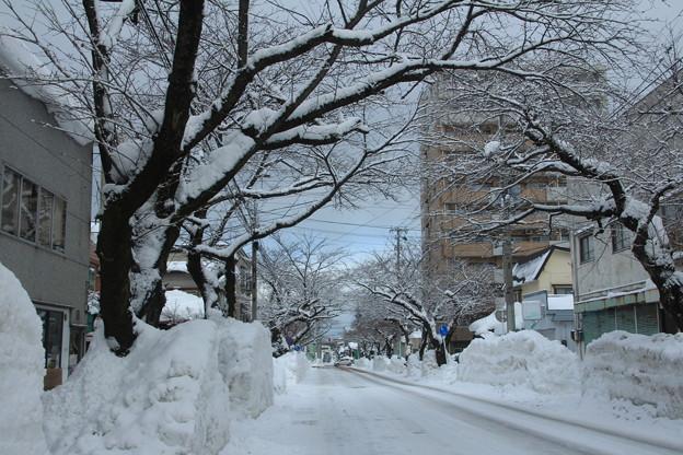 写真: 排雪後の桜大通り04