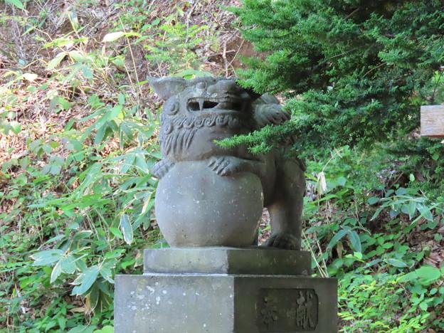 上野幌神社狛犬右
