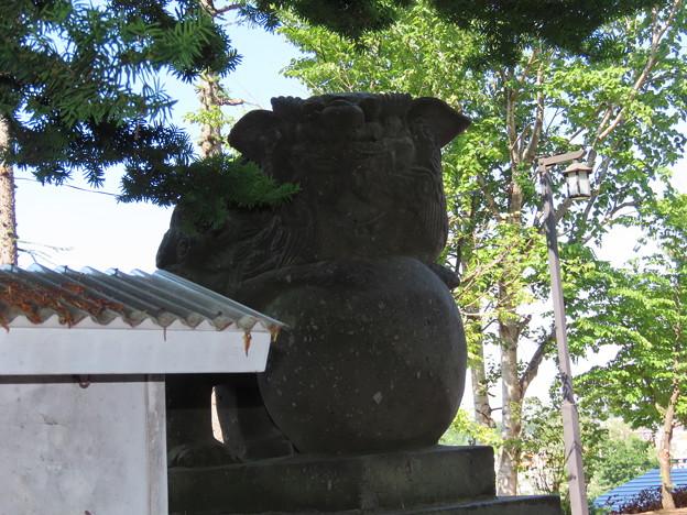 上野幌神社狛犬左IMG_0202
