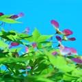 写真: 竹とんぼ