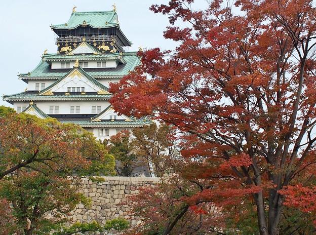 大阪城紅葉