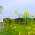Photos: 南から春の便りその1