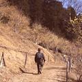 写真: 宝登山の蝋梅散策
