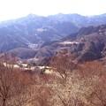 写真: 宝登山の蝋梅風景6