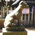 宝登山神社の奥宮の狛犬(左)