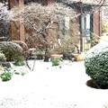 降雪風景1