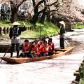 川越さくら祭 舟運風景22