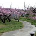 新府の桃源郷風景9