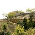 写真: 若葉の竹田城跡