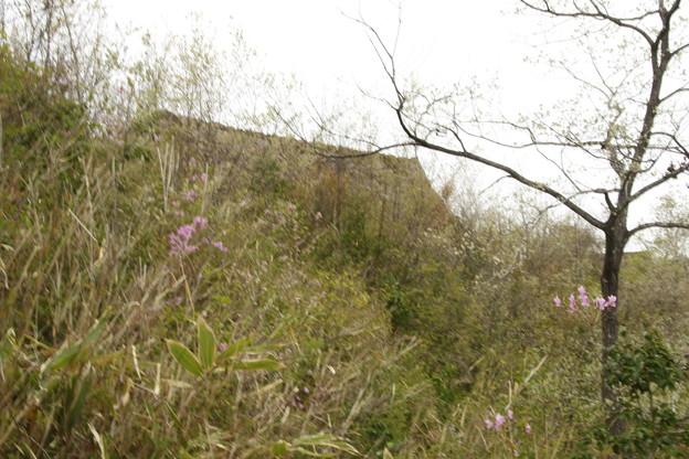 写真: 竹田城跡の帰り坂より