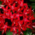 赤い小さな花 名前?