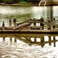 池の杭風景