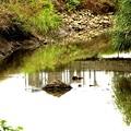 河への反映