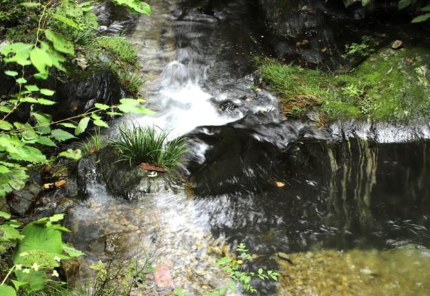 檜原村の渓流