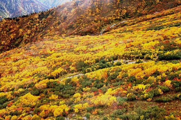 大観峰よりの紅葉風景20