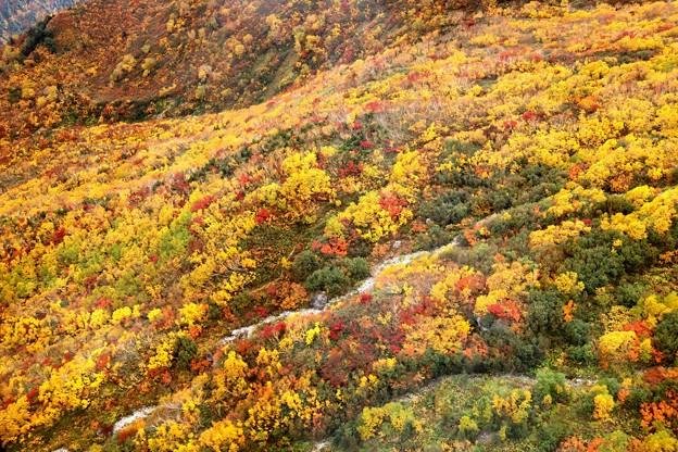大観峰よりの紅葉風景21