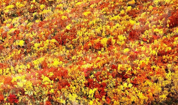 目一杯の紅葉風景