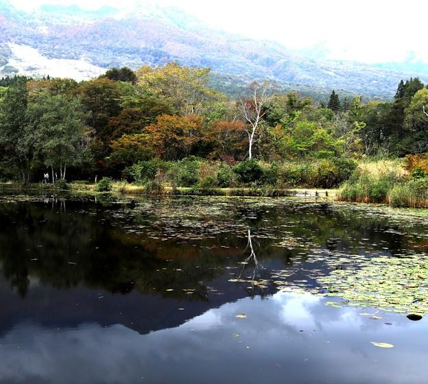 秋のいもり池2