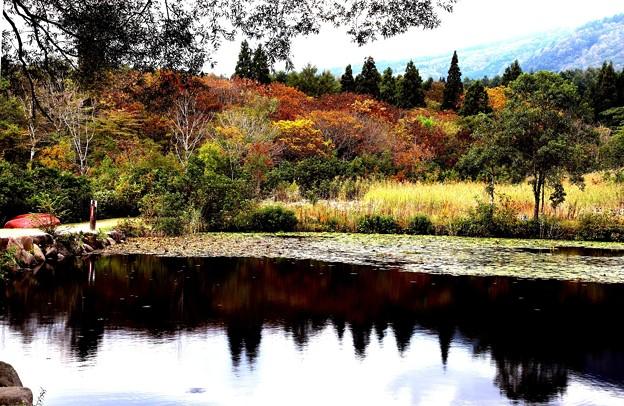 秋のいもり池3