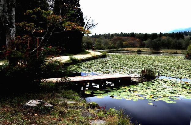 秋のいもり池4