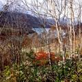 白樺林よりの田代湖