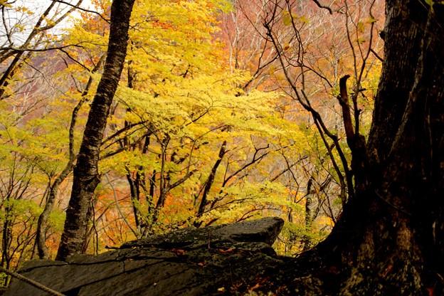 一ノ沢への紅葉風景6