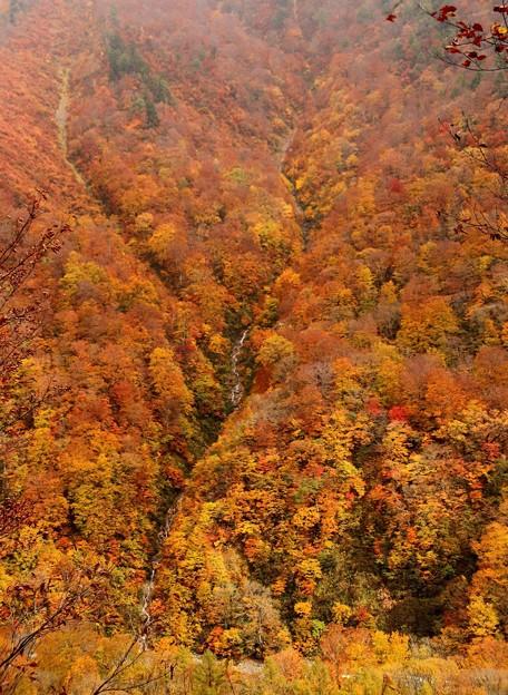 対面の紅葉の山