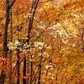 紅葉のなか白い葉