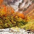 写真: 紅葉と雪渓