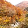 写真: マイガ沢の紅葉