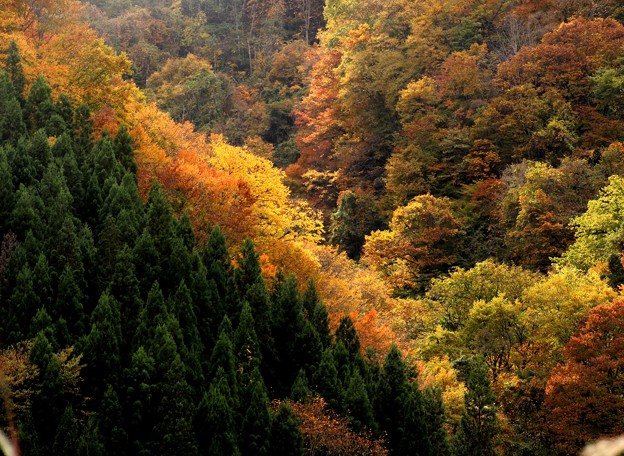 秋谷間への陽射し
