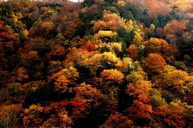 山の木々の紅葉