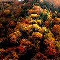 写真: 山の木々の紅葉