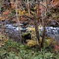 写真: 照葉峡の紅葉1