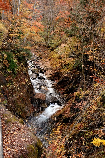 照葉峡の渓流の紅葉1