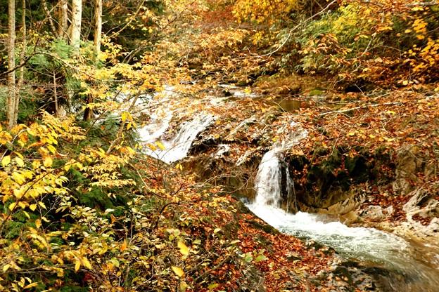 照葉峡の滝の紅葉3