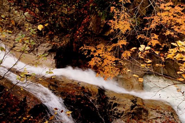 照葉峡の渓流の紅葉4