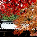 大雄山の紅葉5
