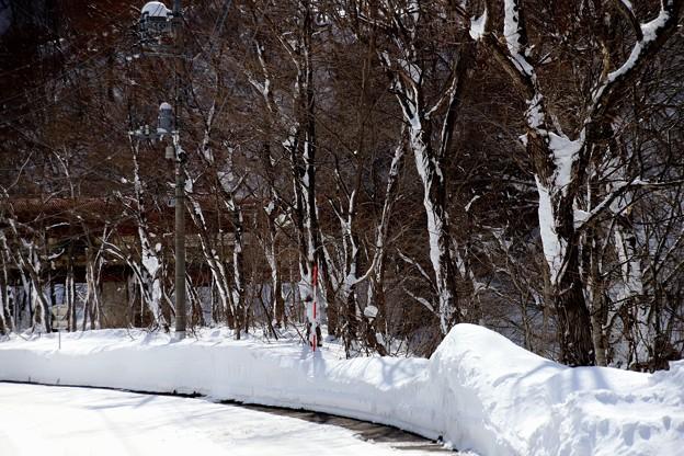 雪の木々でお迎え