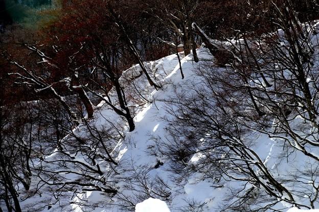 陽射しの雪斜面