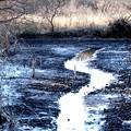 Photos: 湿地帯風景