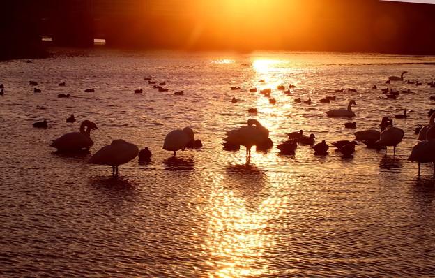 夕陽の染まる越辺川