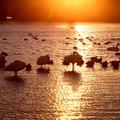 Photos: 夕陽の染まる越辺川