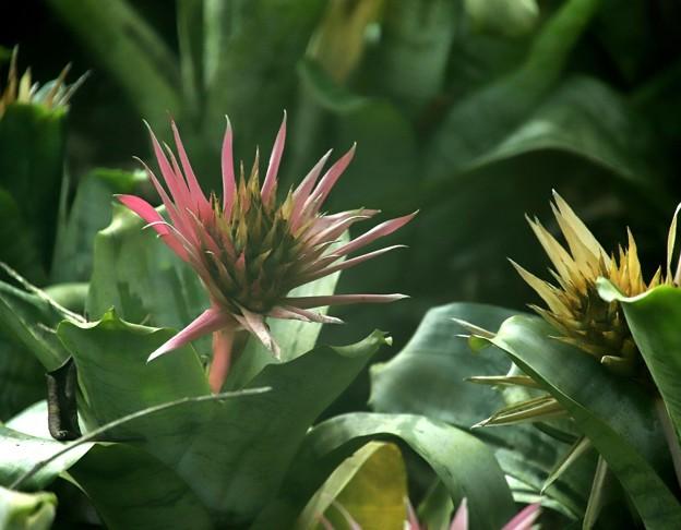 温室の植物2
