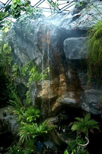温室のなかの滝