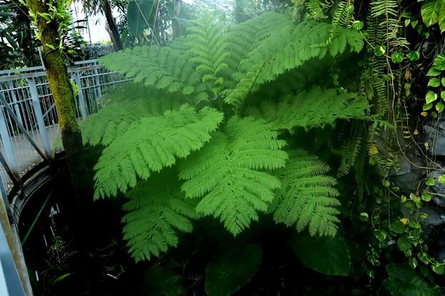 温室の中の植物